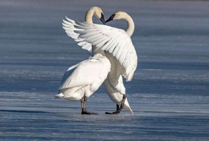 Любовь в мире животных-50 фото-
