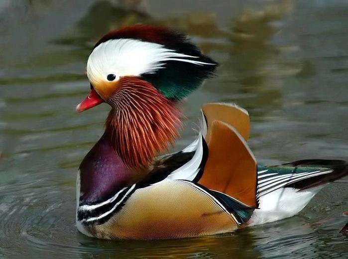 Красота природы - вне конкуренции-25 фото-