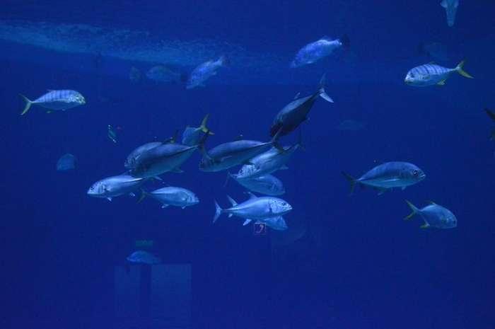 Океанариум на о. Русском-56 фото-