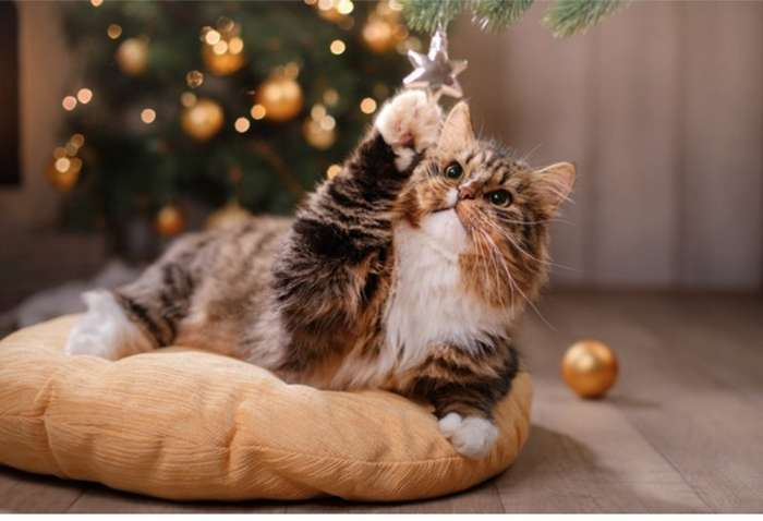 Что значит кошка для дома и трактование цветов животного-1 фото-