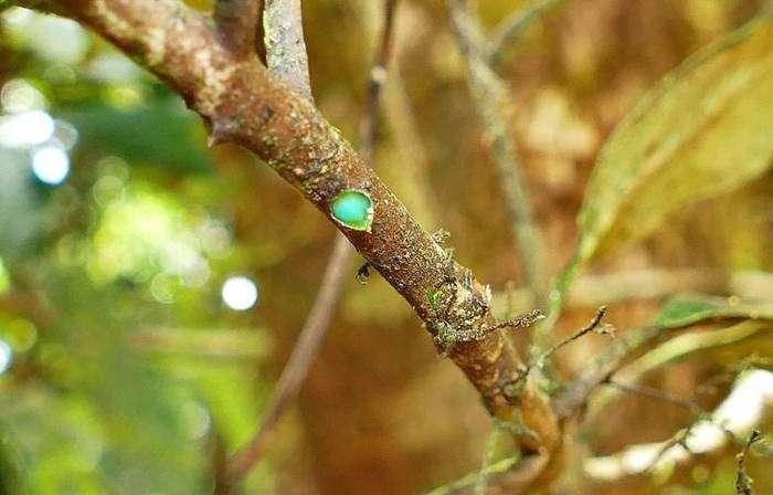 Поразительное дерево, источающее металл
