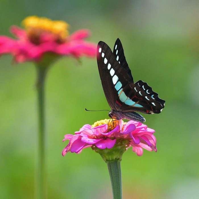 Насекомые и цветы на снимках Каору Тай