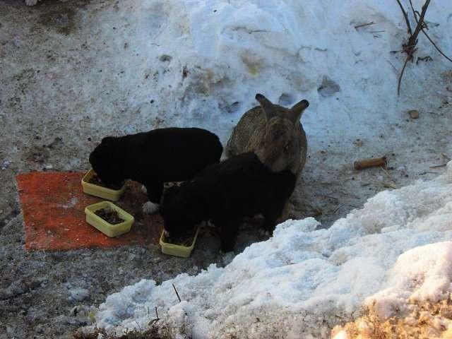 Домашний кролик вырыл себе на зиму нору и приютил трех щенят, которым он заменил папу