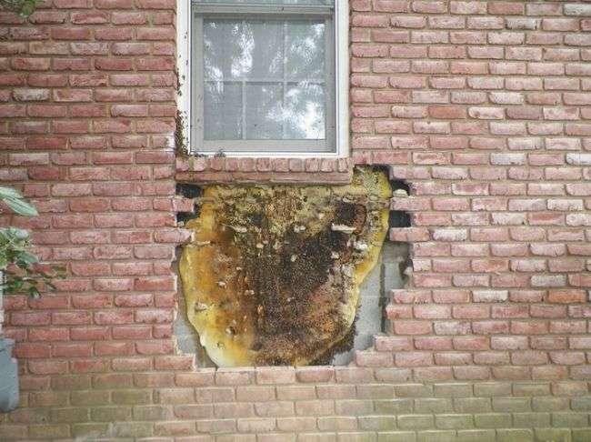 Жильцы жаловались на шум в стене
