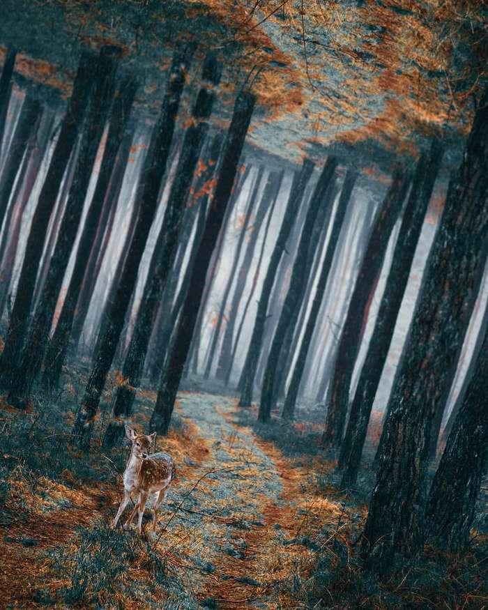 Цифровая страна чудес: сказочные фотоманипуляции Диого Сампайо