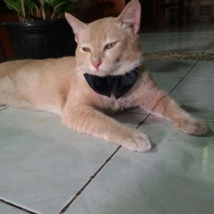 Подборка действительно опасных котов