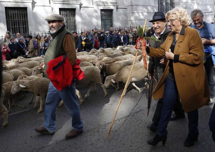Сотни баранов в центре Мадрида