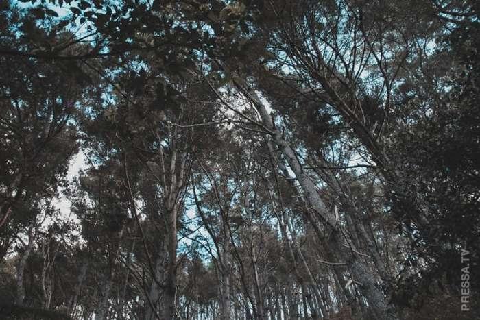 Волшебная земля Коромандель