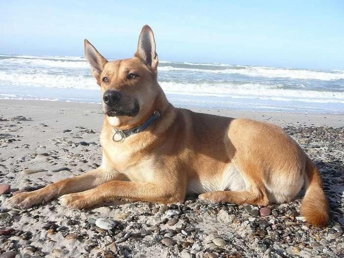 10+редких пород собак, осуществовании которых выинедогадывались