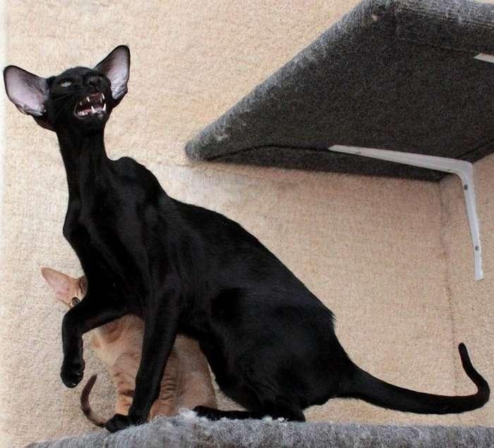 25суровых ихладнокровных котов, скоторыми шутки плохи