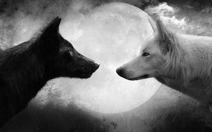 Притча -Два волка--1 фото-