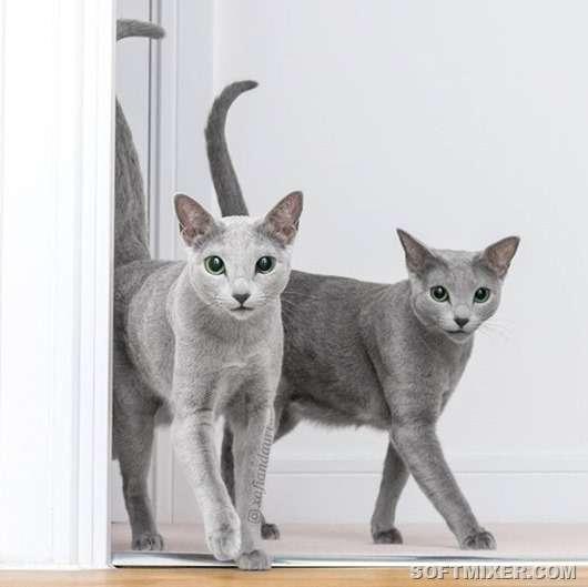 Любопытные факты от заводчика кошек