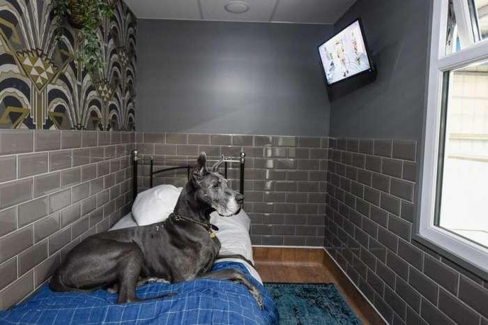 В Великобритании открыли отель для собак