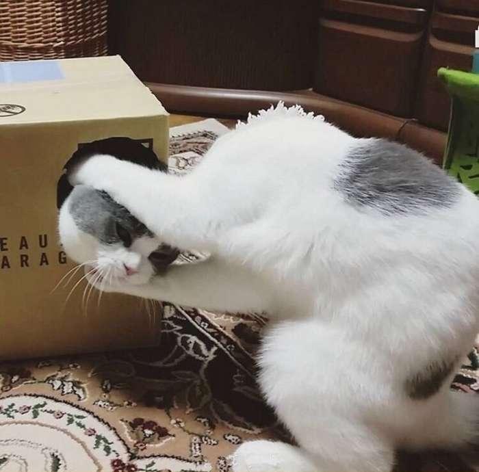 Показалось...прикольные снимки с котами