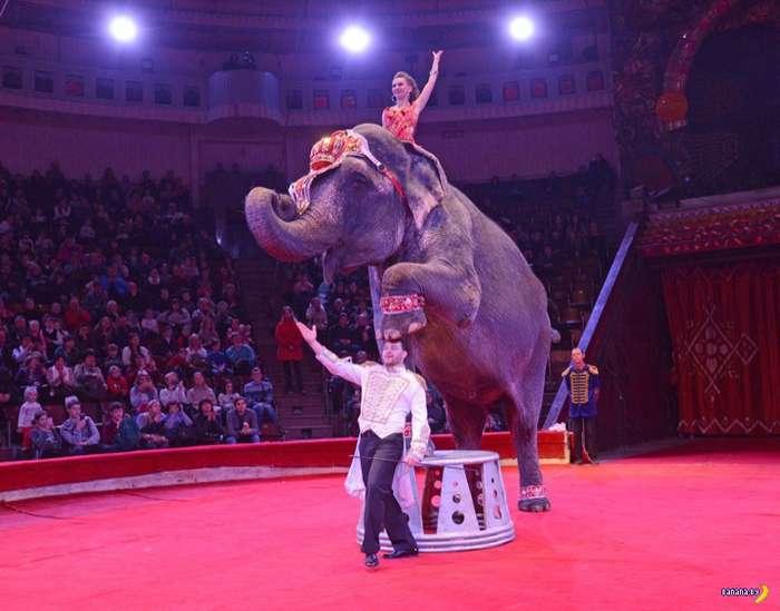 В Португалии освободят животных из циркового плена