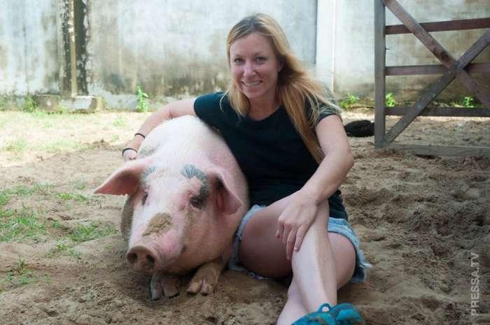 Женщина спасла маленькую свинку и вот, что из нее выросло