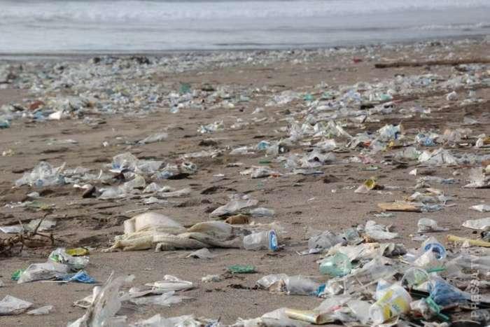 К берегам Индонезии прибило тушу кита с желудком полным пластиковых отходов