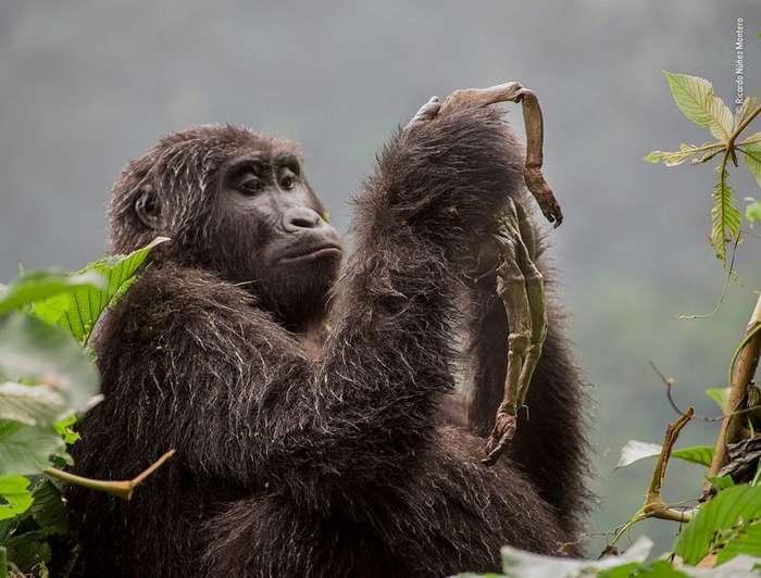 Золотые обезьяны, совы в трубе и дикие кошки-14 фото-