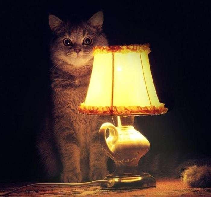 ламповые картинки атмосфера котики ведь хочется