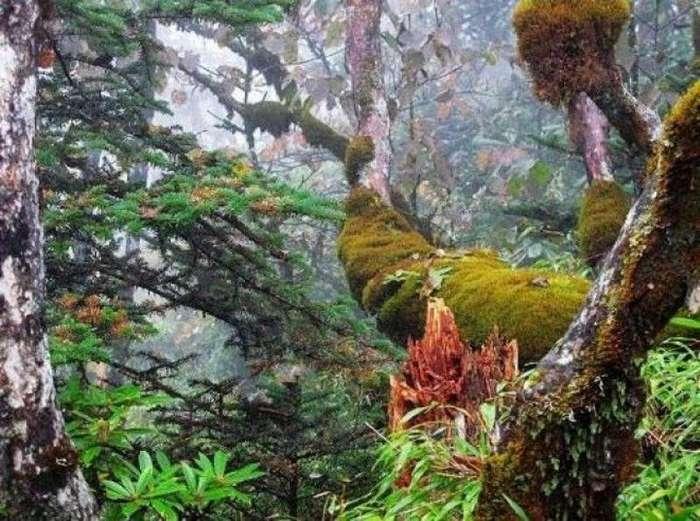 Одно из самых жутких мест в мире - Долина черного бамбука