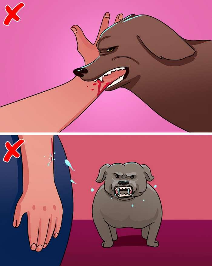 18простых вещей, которые надо знать, если навас напала собака