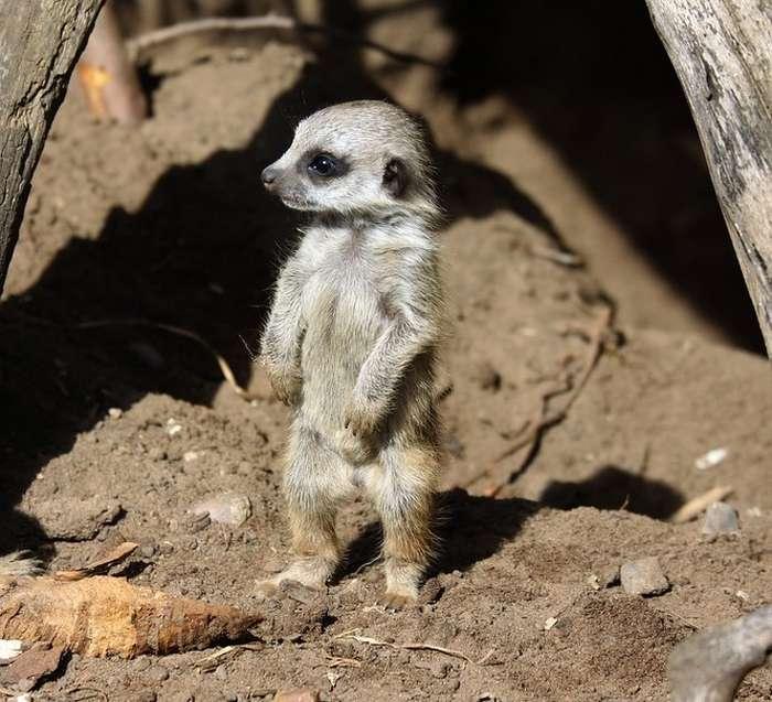 20+детенышей диких животных, которых почти никто изнас невидел вживую
