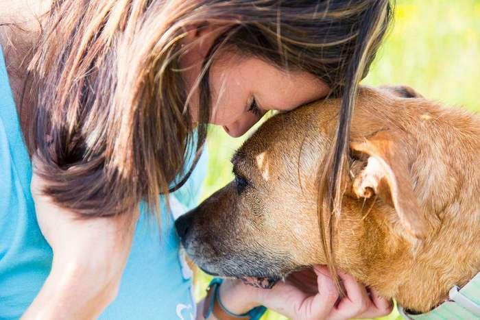 Как собаки могут чувствовать ваши эмоции?