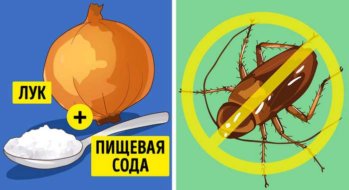 6эффективных способов избавиться отнасекомых ввашем доме