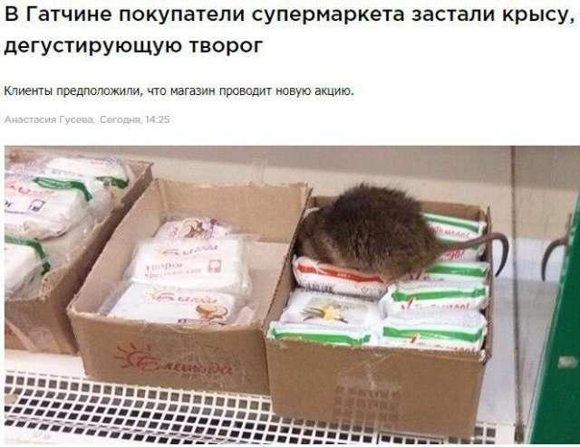 Странные новости со смешными заголовками-20 фото-
