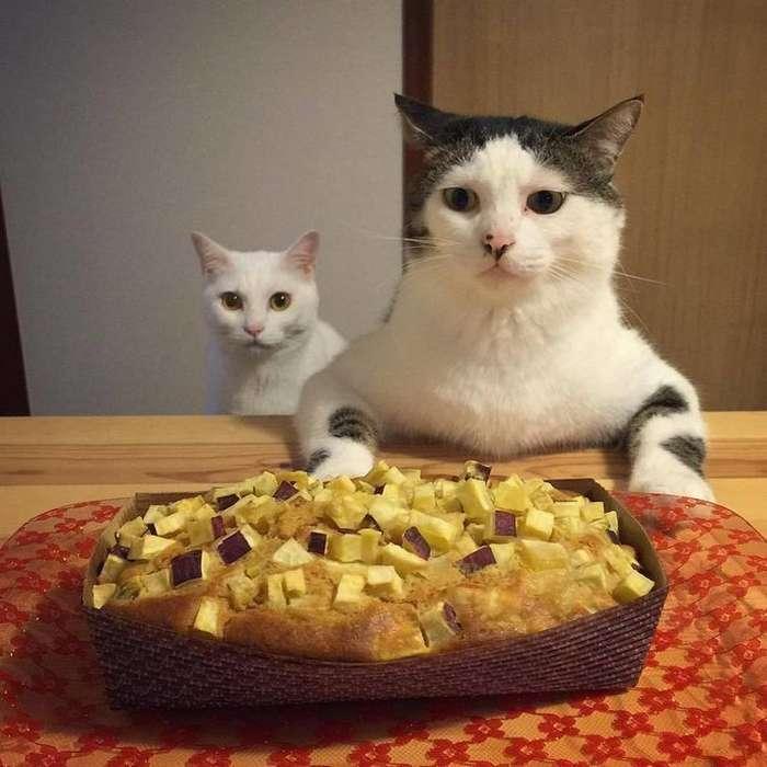 Котейкин ужин!-15 фото-
