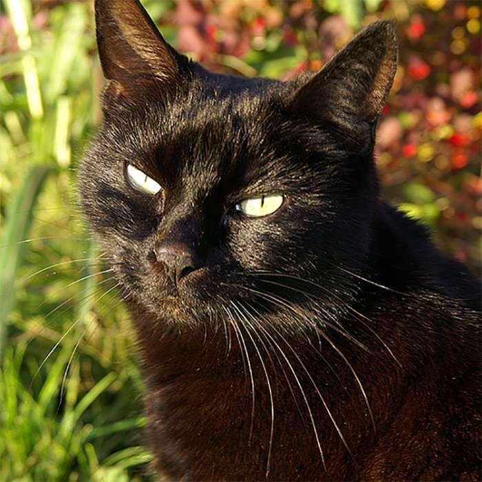 За что котов не любили в Средневековье?