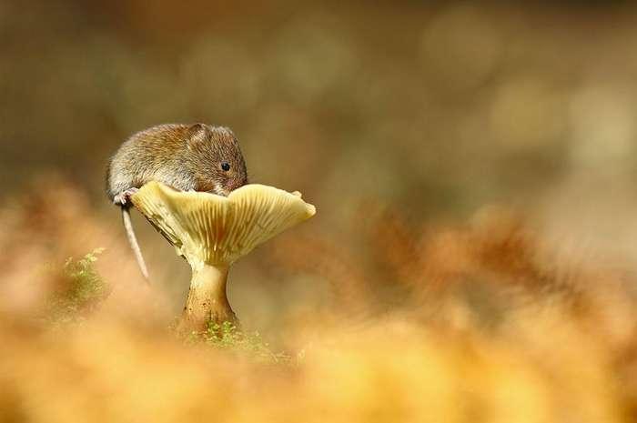 Очаровательные мышки в фотографиях