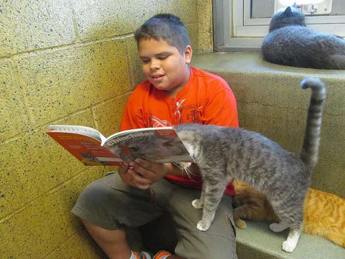 Кошки развивают детям навык чтения