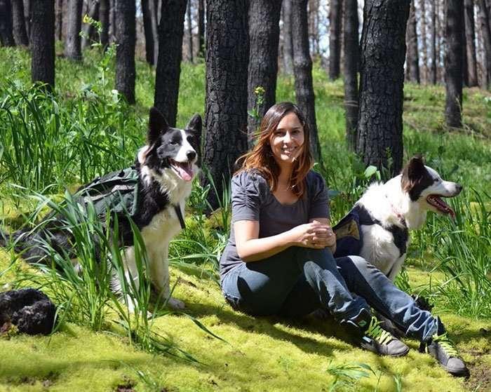 Сгоревшие леса в Чили восстанавливают три четвероногих спасателя