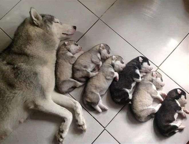 Немного фото собак-мамочек и их малышей