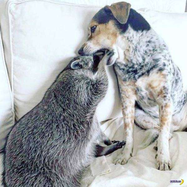 Межвидовая дружба