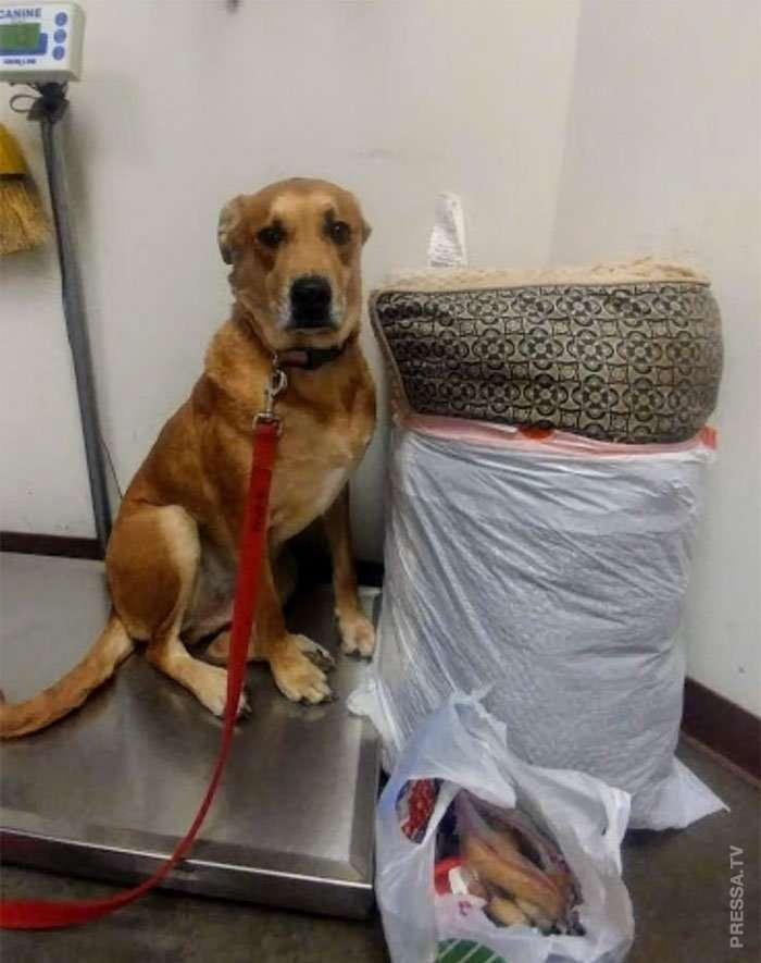 Несчастный пес обрел дом