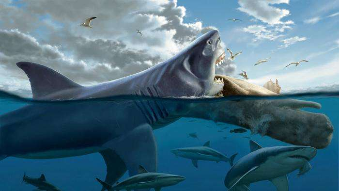 10 самых больших акул в мире (14 фото)