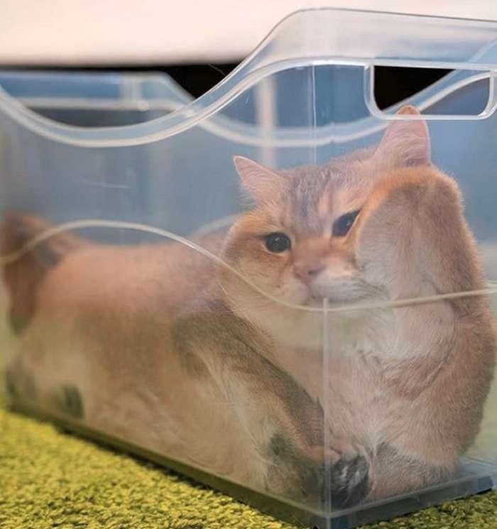 20+котеек, которые пренебрегают всеми известными законами физики