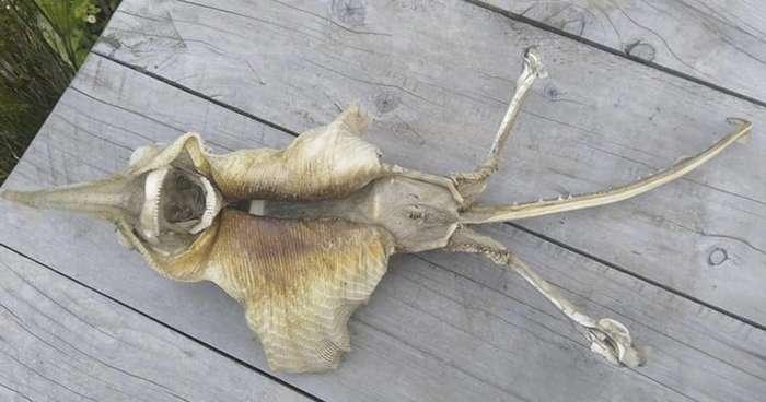 В Новой Зеландии нашли страшный морской скелет-9 фото-