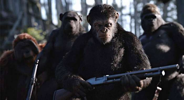 Обезьяний геноцид: чем мы отличаемся от шимпанзе? (6 фото)