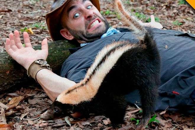 Скунс: самое вонючее животное на планете