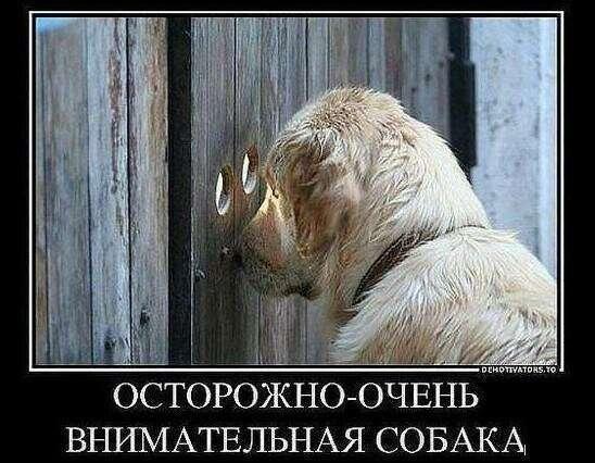 Верховный суд РФ разрешил использовать шпионскую технику для личной безопасности-6 фото-