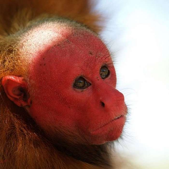 15настолько редких животных, что вихсуществование непросто поверить