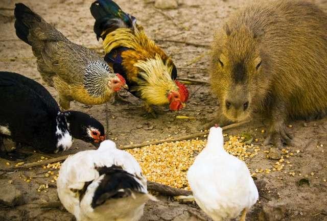 С этими животными все хотят подружиться