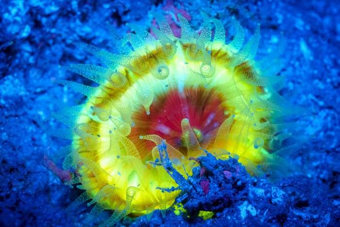 Существа морей и океанов, которые светятся
