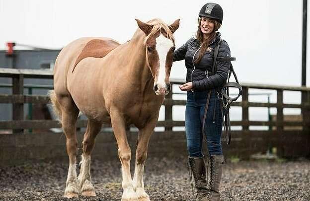 Британский парикмахер превращает лошадей в настоящие произведения искусства