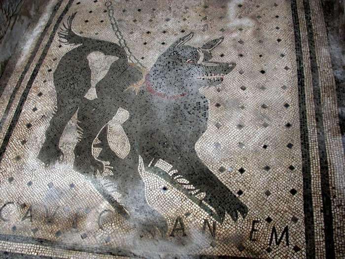 Не самая простая история собачьих ошейников от Древнего Египта до современности