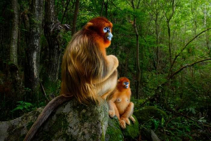 Выставка потрясающих работ фотографов дикой природы 2018 года