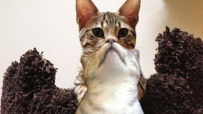 Подгадали: коты, попавшие в кадр в самую удачную секунду (фото)